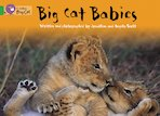 Big Cat Babies (Book Band Green)