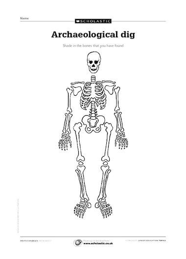 archaelogical dig  u2013 skeletons  u2013 primary ks2 teaching resource