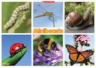 Minibeasts: Minibeasts poster
