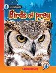 Investigate: Birds of Prey x 6