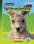 Investigate: Kangaroos x 6