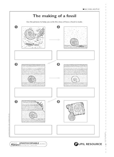 Illustrated stages in a fossil's development to help children write ...