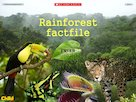 Rainforest factfile – interactive