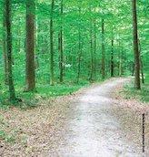 Footpath through wood