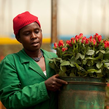 Worker at a flower farm in Nairobi