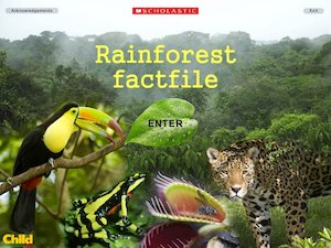 Rainforest factfile