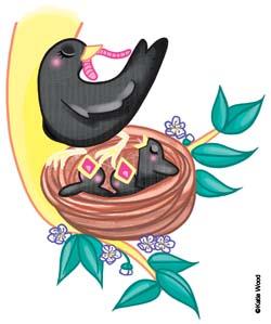 habitats - blackbird.jpg