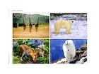 Wild animals - poster