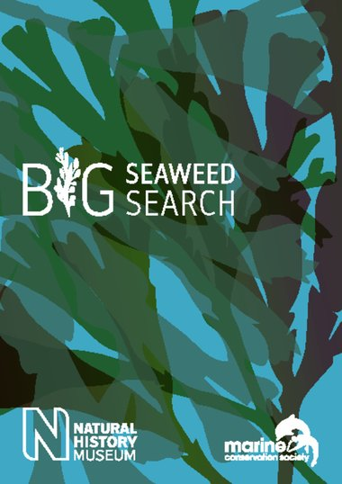 The Big Seaweed Search guide