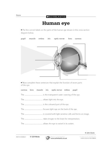Diagram Of The Human Eye Primary Ks2 Teaching Resource