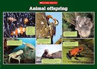 Animal offspring – photo poster