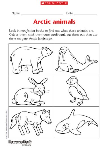 Illustrations of Arctic animals for children to identify, cut out and ...