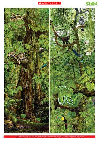 Fotos - Free Download Tropical Rainforest Food Chain Hd Wallpaper