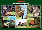 Animal offspring