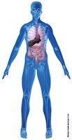 Human body: organs