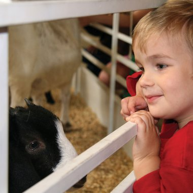 Boy at a farm