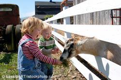 Children feeding goat