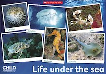 Life under the sea