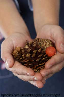 Child holding a pine cone