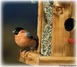 bird on birdbox