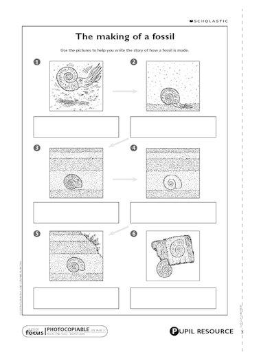 Fossil worksheets ks2