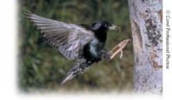 feeding bird image